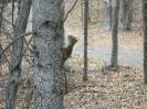 mal wieder en Squirrel