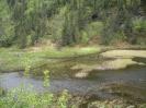 Tümpel mit Wald