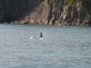 Orca der erste...