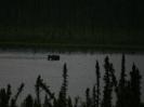der badende Elch